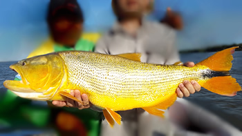 Quiero pescar Dorado