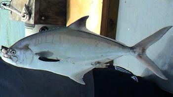Pesca de Palometa de mar